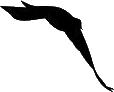 Bitter Bird Webs.com